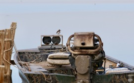 Spotted Sandpiper on a boat